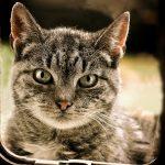 Katzenklappe mit Chip Kaufberatung – Die besten Katzenklappe mit Chip im Vergleich bzw. Test 2021